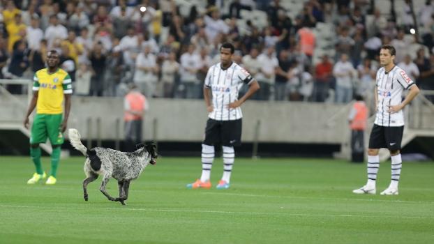 Cachorro invadiu o campo durante a partida entre Corinthians e Coritiba