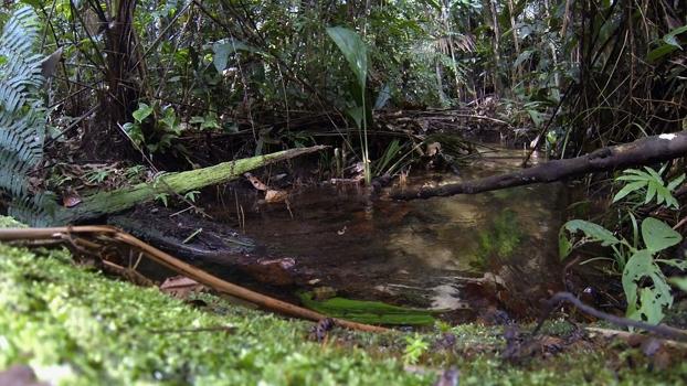 Pedala Manaus | Aventuras com Renata Falzoni
